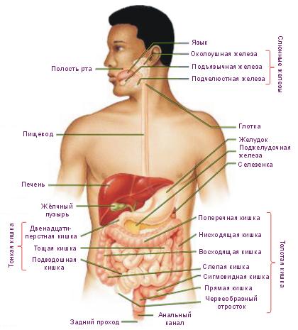 Модификация: Human Physiology.